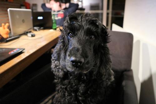Ons eerste hondje – fase 1