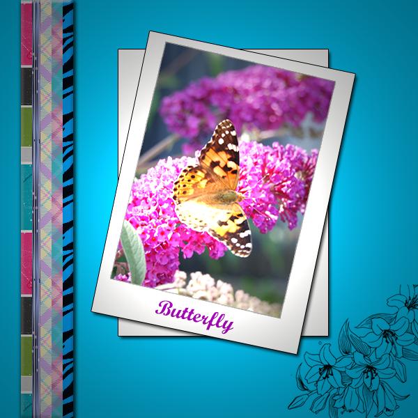 vlinder portofolio