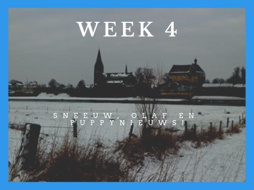 Week 4: fotoshoot, sneeuw en puppy nieuws!