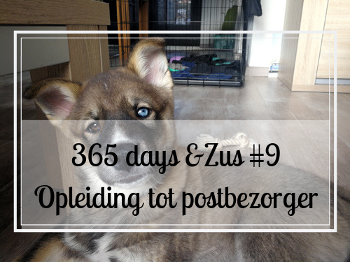365 days &Zus #9 opleiding tot postbezorger