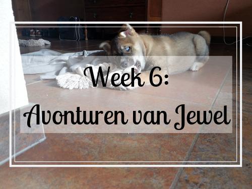 Week 6: avonturen met de kleine Jewel