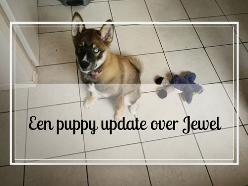 Een puppy update over Jewel
