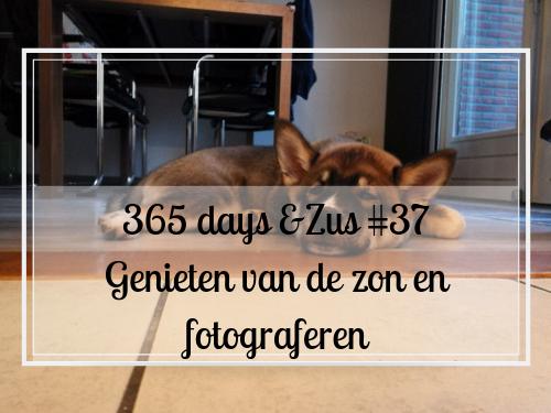 365 days &Zus #37 genieten van de zon en fotograferen
