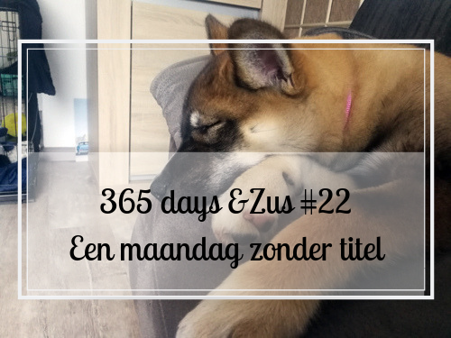 365 days &Zus #22 een maandag zonder titel