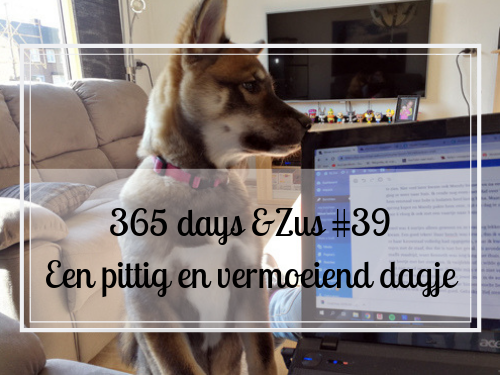 365 days &Zus #39 een pittig en vermoeiend dagje