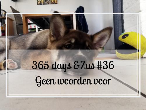 365 days &Zus #36 geen woorden voor