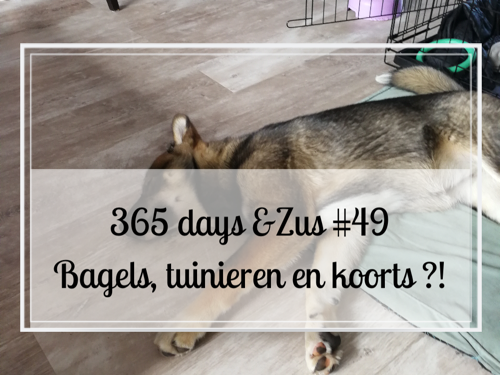 365 days &Zus #49 bagels, tuinieren en koorts ?!