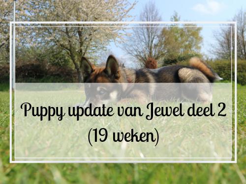 Puppy update van Jewel deel 2 (19 weken)