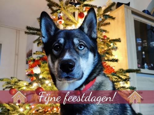 Vertraagde post: Een hele fijne 2e kerstdag!