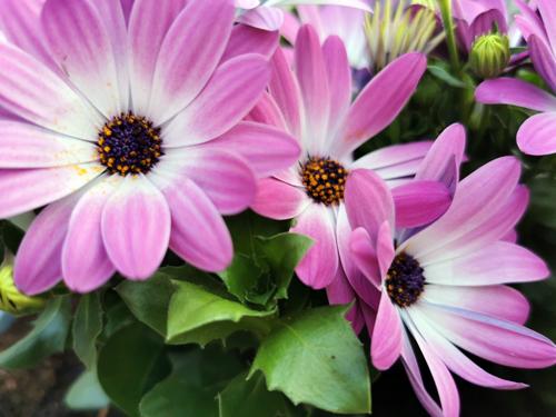 &Zus update #21 bloemen voor in de tuin en gezelligheid