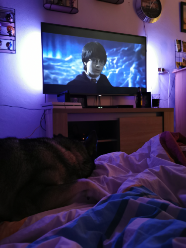 &Zus update #42 een Harry Potter filmavond en een drukke week