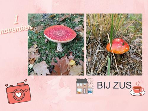 Bij Zus vlogt! Bij Zus' blogverjaardag en huiselijke zondag