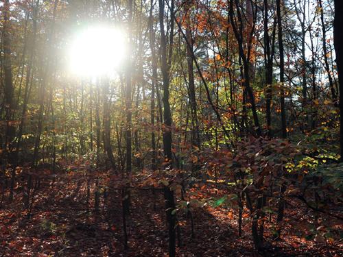 Verdwaald in mijn eigen dwaal bos