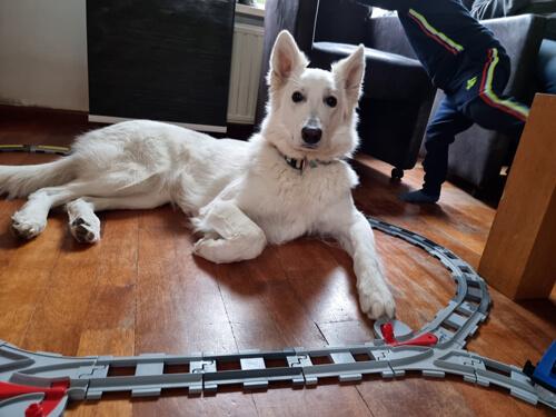 Duplo trein