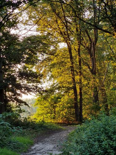 zonnetje in het bos